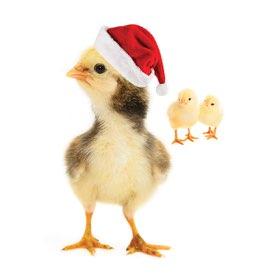 Chicks: $10