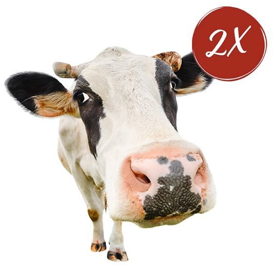 $500 Cow