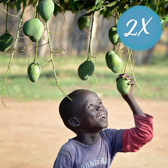 $10 Fruit-tree seedling