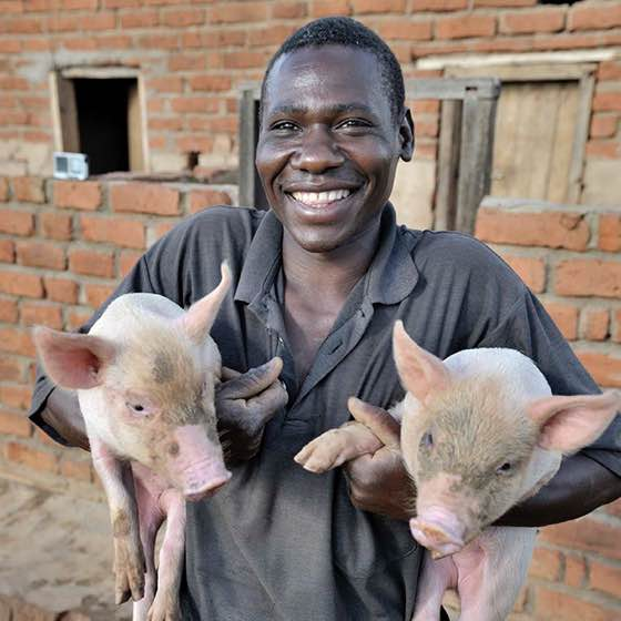 Man with two pigs